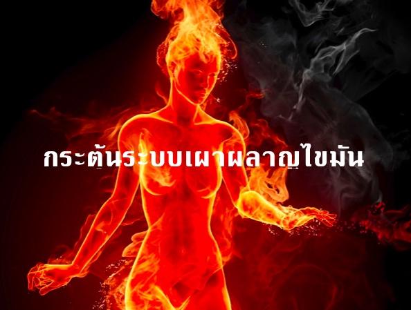 กระตุ้นระบบเผาผลาญไขมันขั้นพื้นฐาน